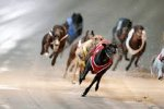 Thumbnail for the post titled: Online Greyhound Racing Guide for New Zealanders